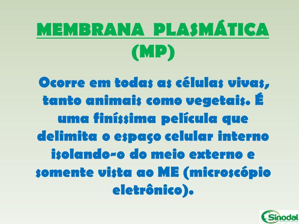 MEMBRANA PLASMÁTICA (MP) Ocorre em todas as células vivas, tanto animais como vegetais. É uma finíssima película que delimita o espaço celular interno