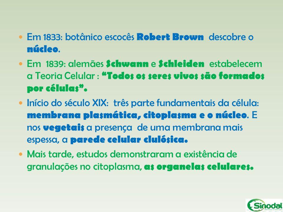 Em 1833: botânico escocês Robert Brown descobre o núcleo. Em 1839: alemães Schwann e Schleiden estabelecem a Teoria Celular : Todos os seres vivos são