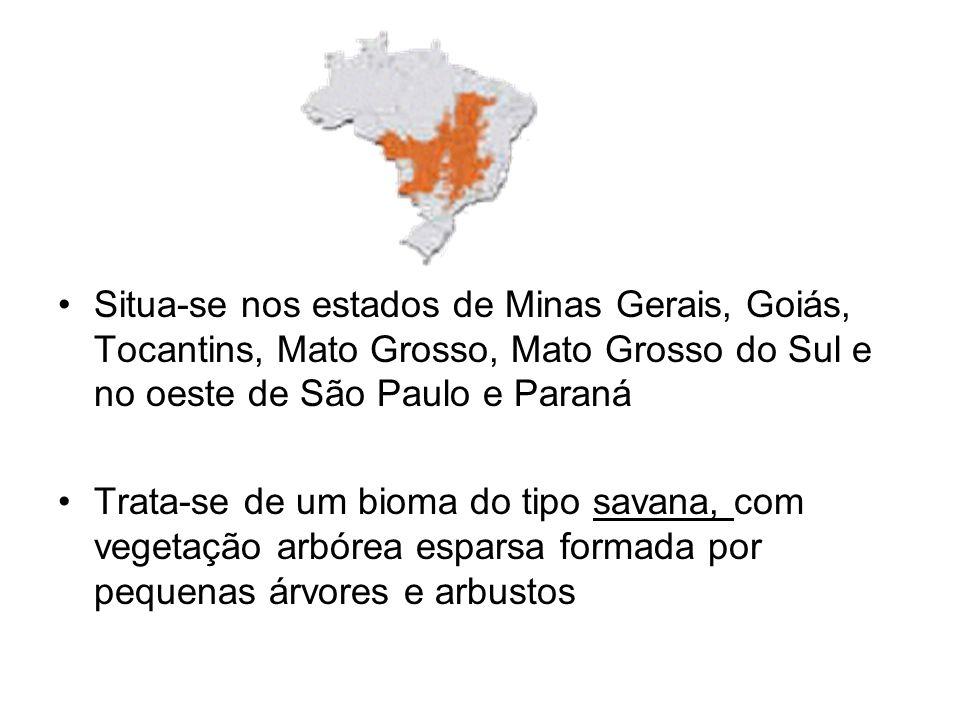 Situa-se nos estados de Minas Gerais, Goiás, Tocantins, Mato Grosso, Mato Grosso do Sul e no oeste de São Paulo e Paraná Trata-se de um bioma do tipo savana, com vegetação arbórea esparsa formada por pequenas árvores e arbustos