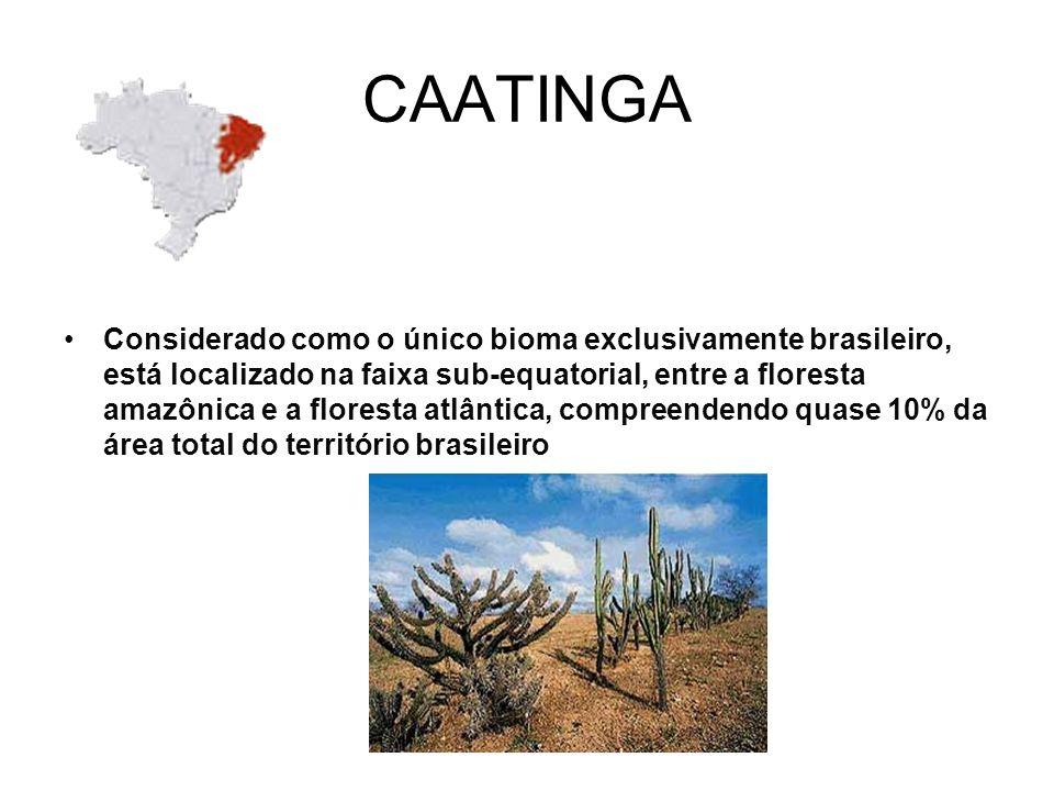CAATINGA Considerado como o único bioma exclusivamente brasileiro, está localizado na faixa sub-equatorial, entre a floresta amazônica e a floresta atlântica, compreendendo quase 10% da área total do território brasileiro