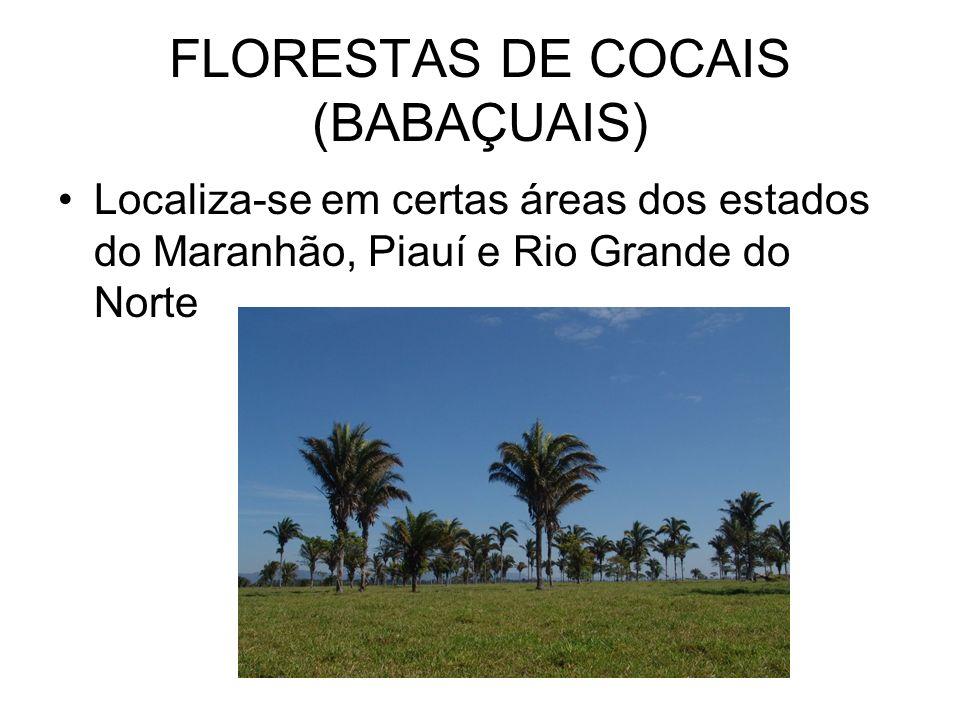 FLORESTAS DE COCAIS (BABAÇUAIS) Localiza-se em certas áreas dos estados do Maranhão, Piauí e Rio Grande do Norte