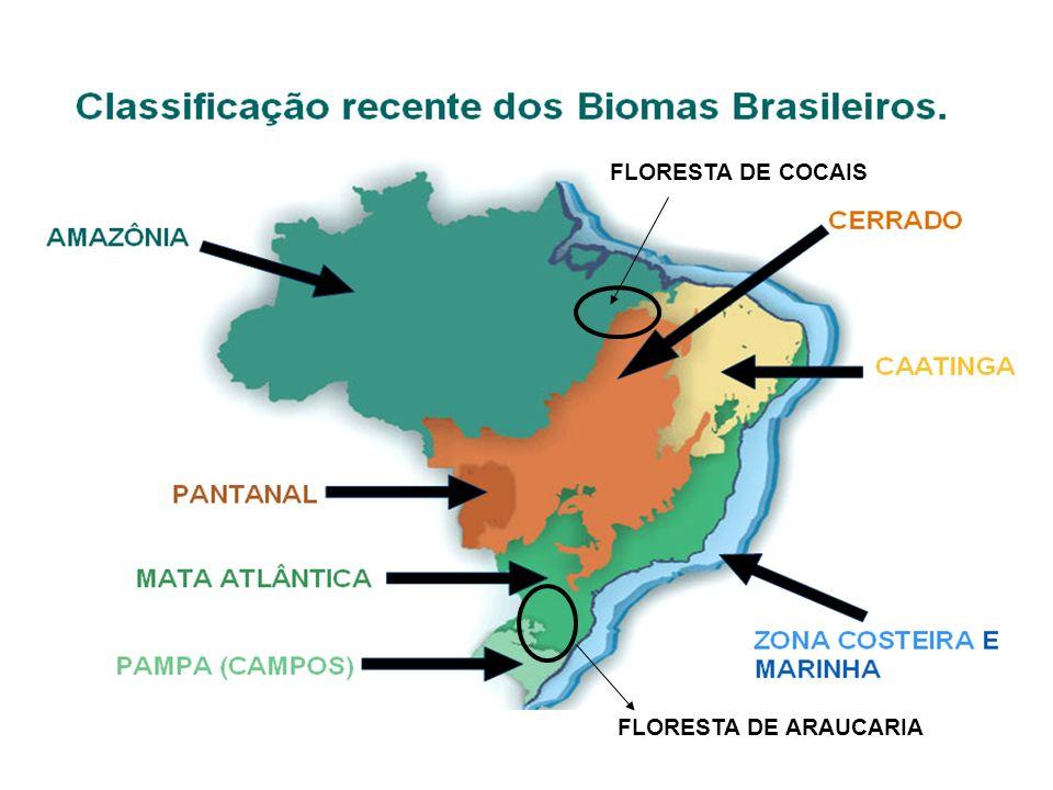Estrato Arbustivo: Muito denso Diversos tipos de arbustos e samabaias (Dicksonia)
