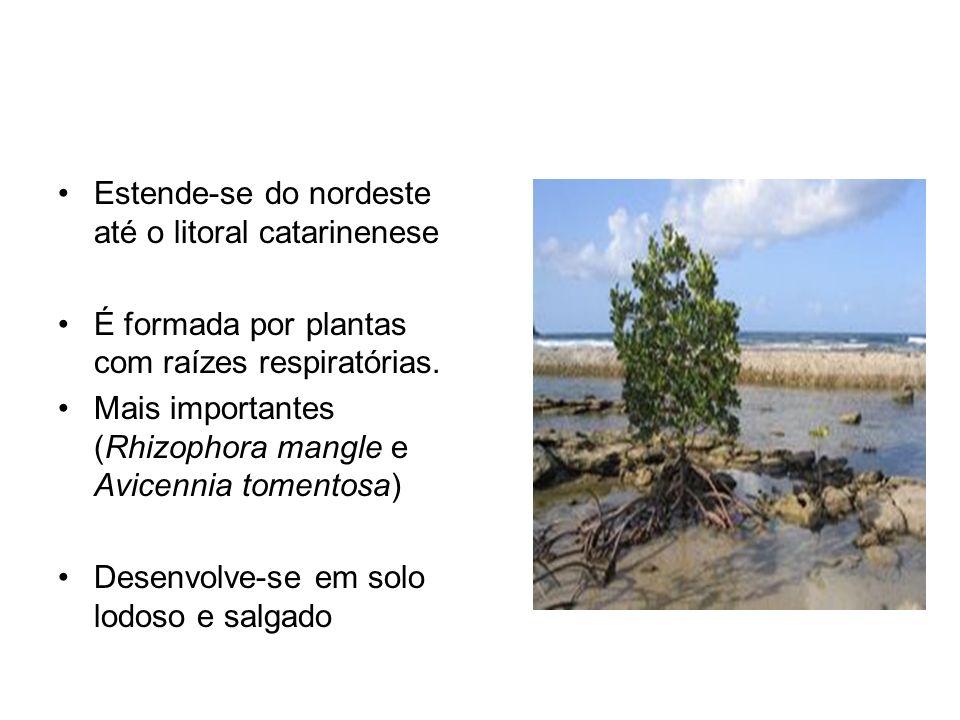 Estende-se do nordeste até o litoral catarinenese É formada por plantas com raízes respiratórias.