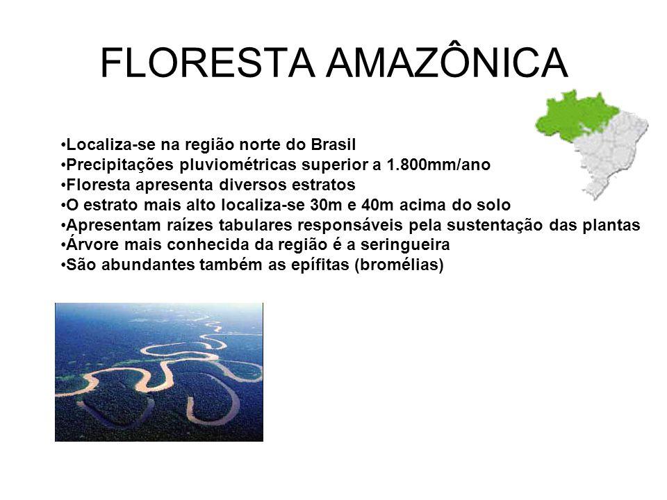 FLORESTA AMAZÔNICA Localiza-se na região norte do Brasil Precipitações pluviométricas superior a 1.800mm/ano Floresta apresenta diversos estratos O estrato mais alto localiza-se 30m e 40m acima do solo Apresentam raízes tabulares responsáveis pela sustentação das plantas Árvore mais conhecida da região é a seringueira São abundantes também as epífitas (bromélias)