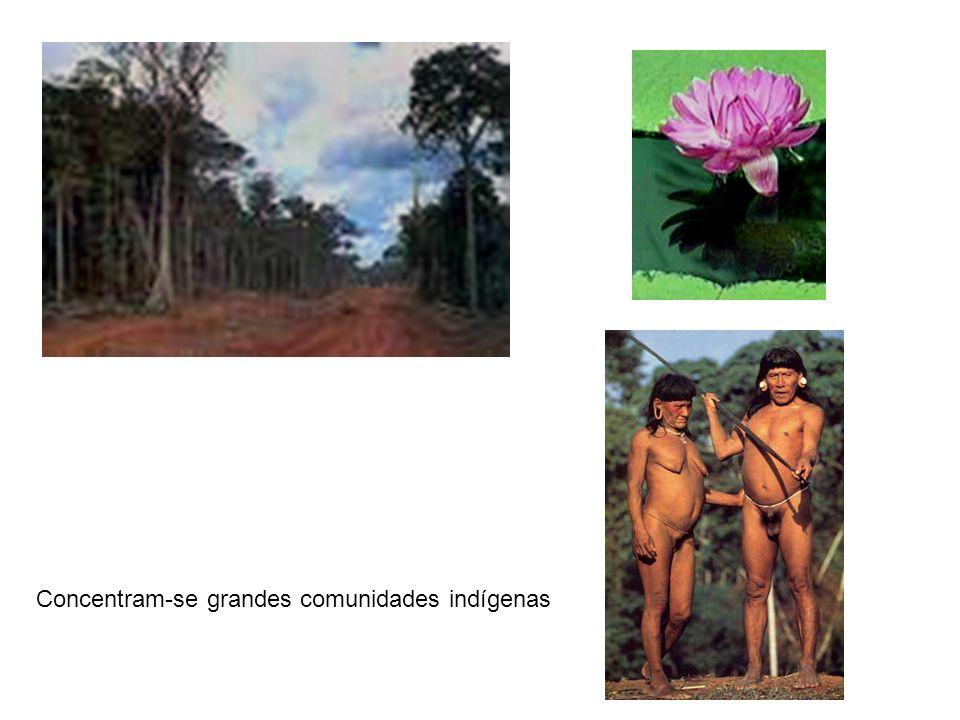 Região da bacia amazônica ostenta a maior variedade de aves, primatas, roedores, jacarés, sapos, insetos, lagartos e peixes de água doce de todo o planeta.