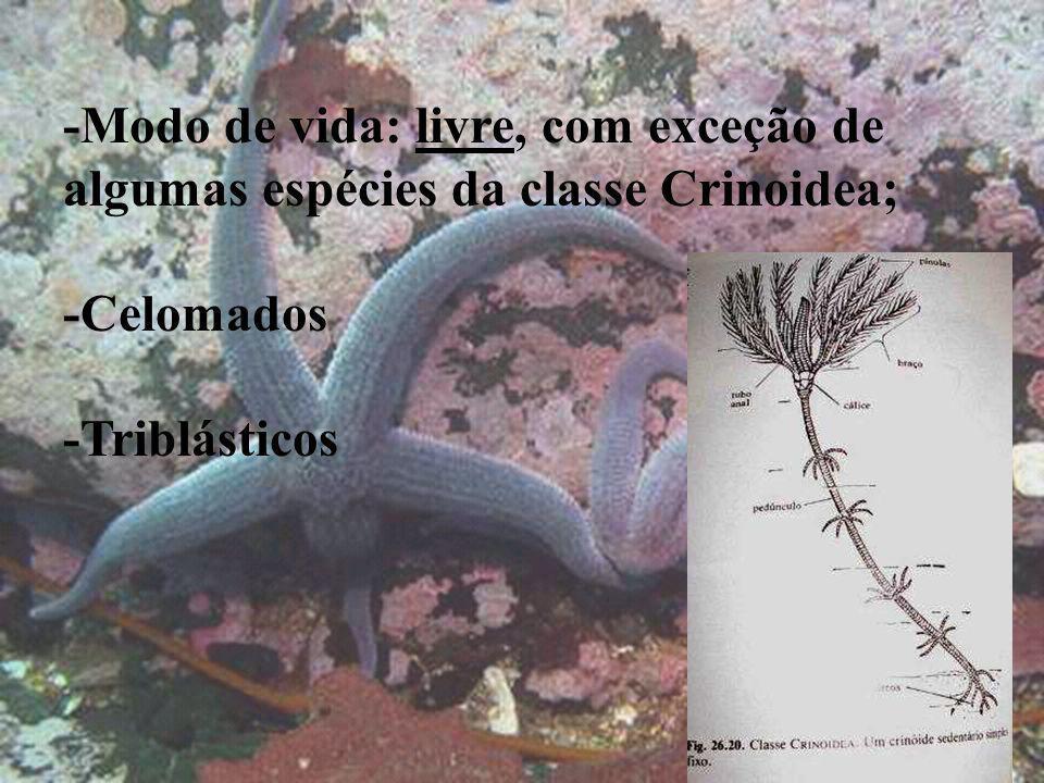 Cosmasterias lurida -Modo de vida: livre, com exceção de algumas espécies da classe Crinoidea; -Celomados -Triblásticos