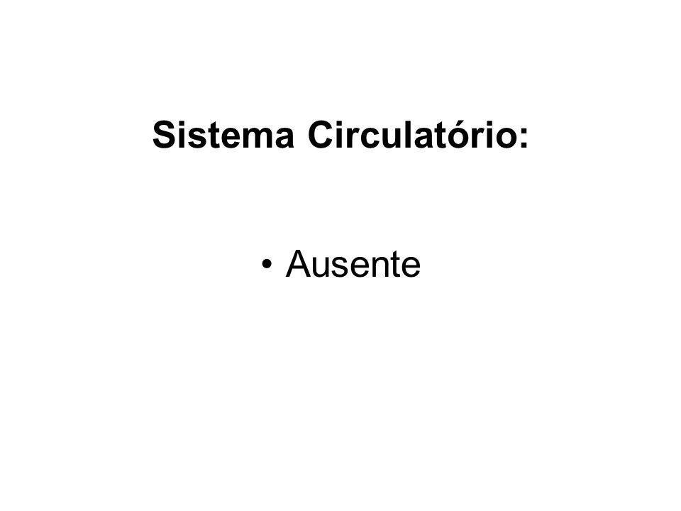 Sistema Circulatório: Ausente