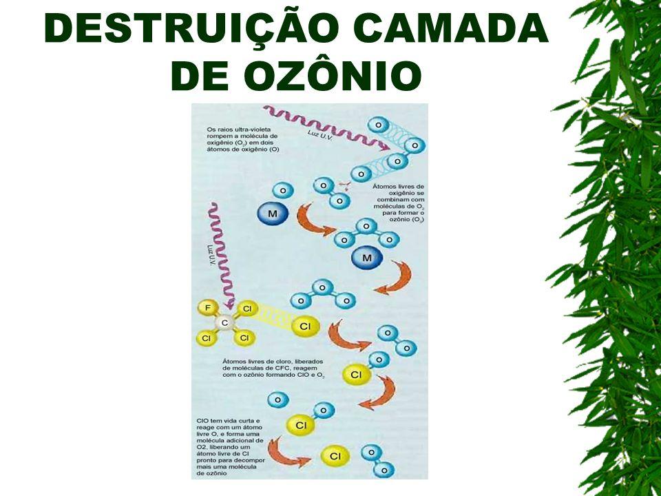 DESTRUIÇÃO CAMADA DE OZÔNIO
