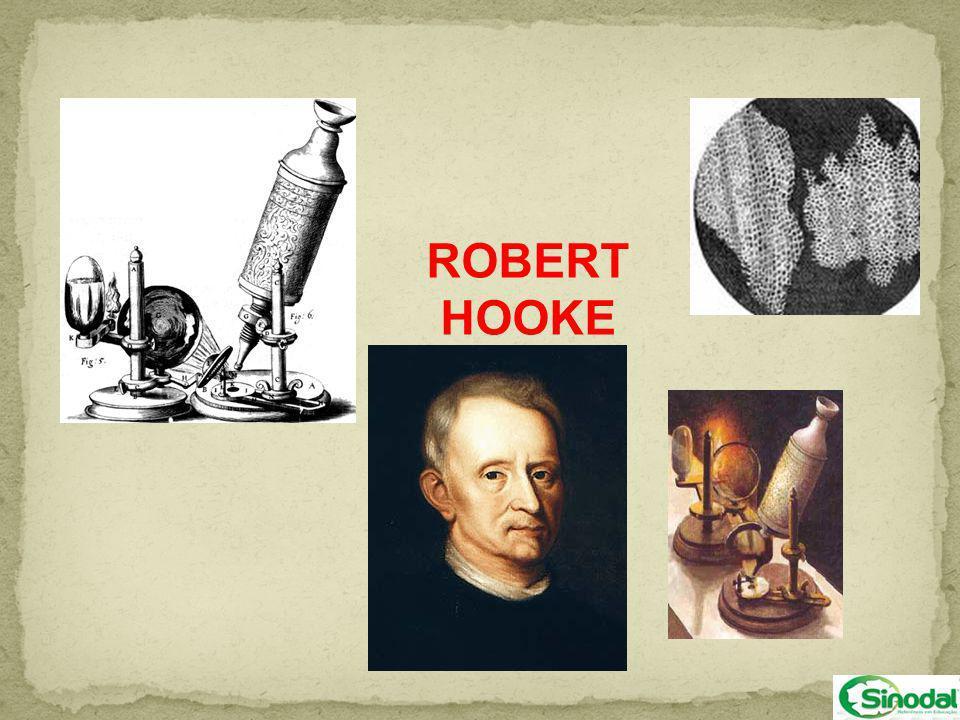 O termo célula foi usado pela primeira vez por Robert Hooke, quando esse cientista observava em um microscópio muito simples um pedaço de cortiça, que é um tecido vegetal obtido da casca de caules velhos de certas árvores, no qual as células já morreram.