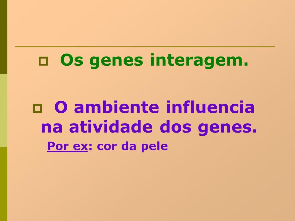 Os genes interagem. O ambiente influencia na atividade dos genes. Por ex: cor da pele