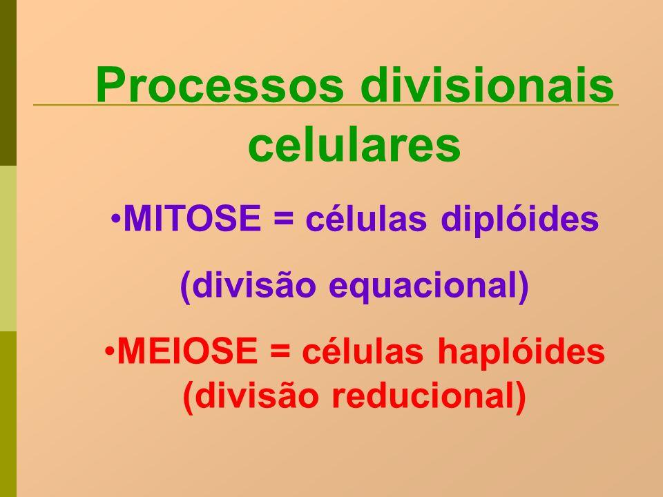 Processos divisionais celulares MITOSE = células diplóides (divisão equacional) MEIOSE = células haplóides (divisão reducional)