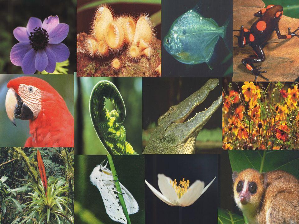 + 13 milhões de espécies descritas: + 1,7 milhões