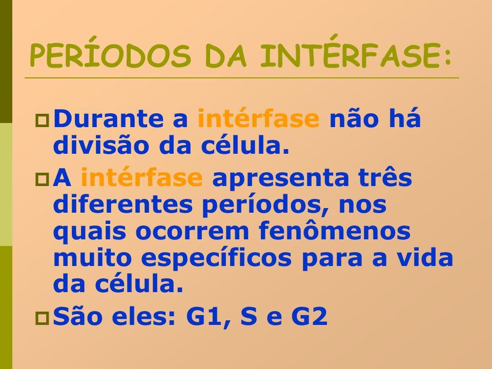 PERÍODOS DA INTÉRFASE: Durante a intérfase não há divisão da célula. A intérfase apresenta três diferentes períodos, nos quais ocorrem fenômenos muito