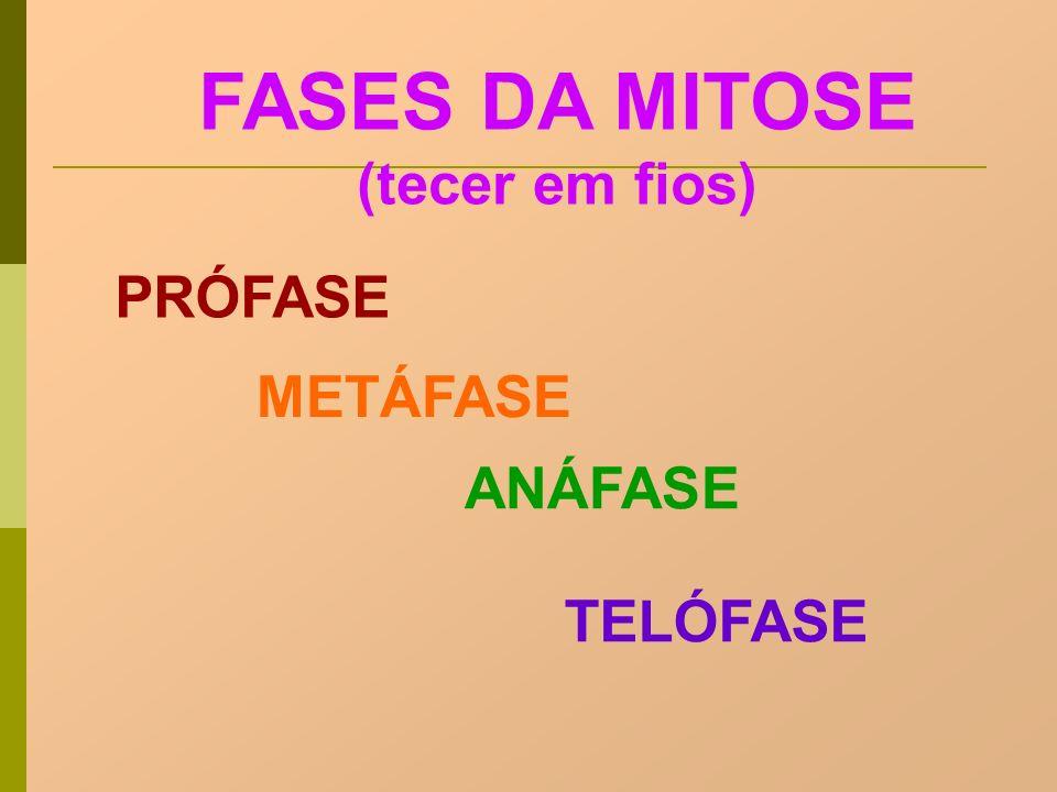 FASES DA MITOSE (tecer em fios) PRÓFASE METÁFASE ANÁFASE TELÓFASE