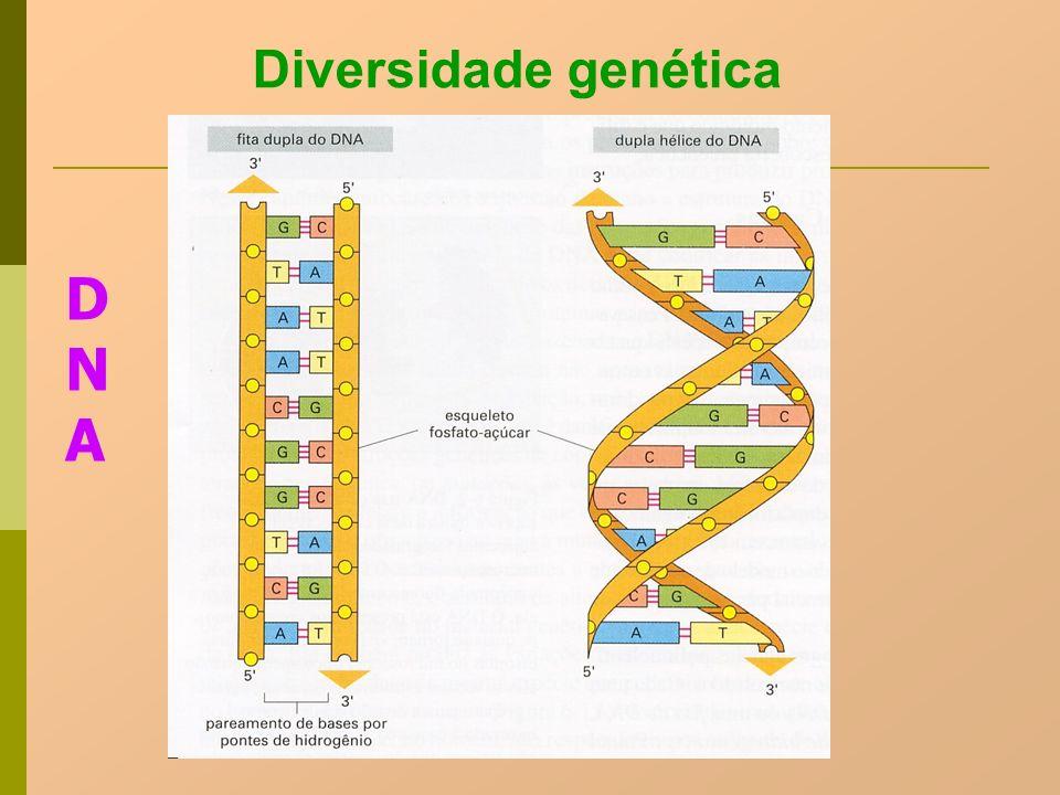 Diversidade genética DNADNA