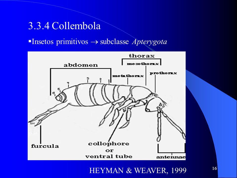 16 3.3.4 Collembola Insetos primitivos subclasse Apterygota HEYMAN & WEAVER, 1999