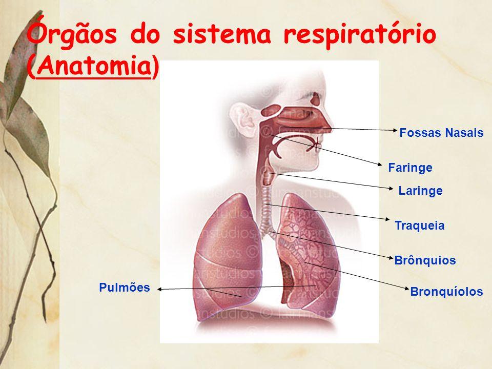 Órgãos do sistema respiratório (Anatomia ) Fossas Nasais Faringe Laringe Traqueia Brônquios Bronquíolos Pulmões