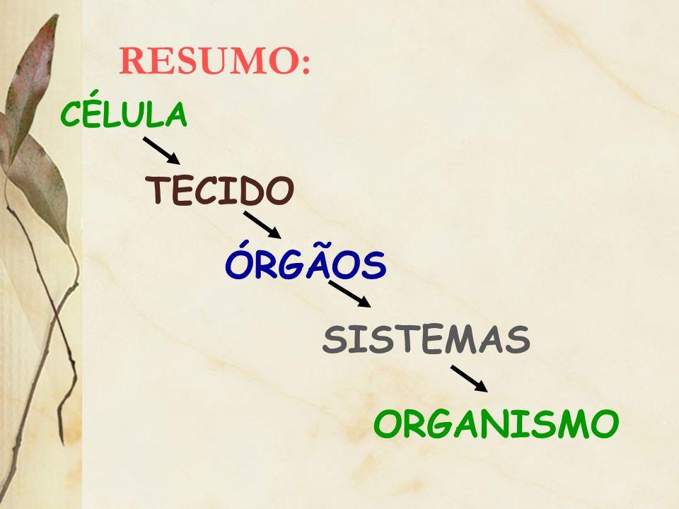RESUMO: ORGANISMO CÉLULA TECIDO ÓRGÃOS SISTEMAS