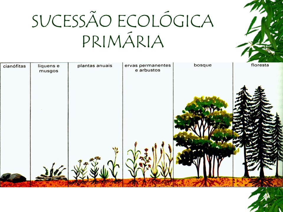 SUCESSÃO ECOLÓGICA PRIMÁRIA