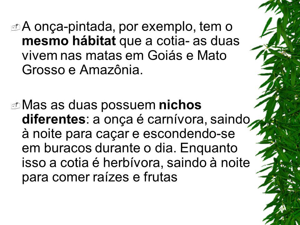 A onça-pintada, por exemplo, tem o mesmo hábitat que a cotia- as duas vivem nas matas em Goiás e Mato Grosso e Amazônia. Mas as duas possuem nichos di