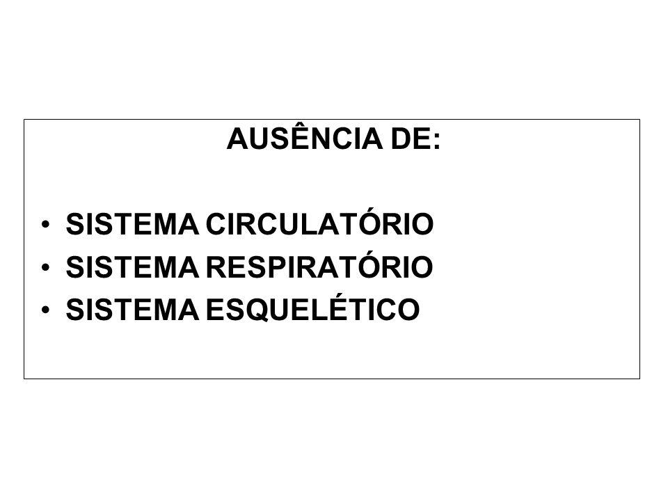AUSÊNCIA DE: SISTEMA CIRCULATÓRIO SISTEMA RESPIRATÓRIO SISTEMA ESQUELÉTICO