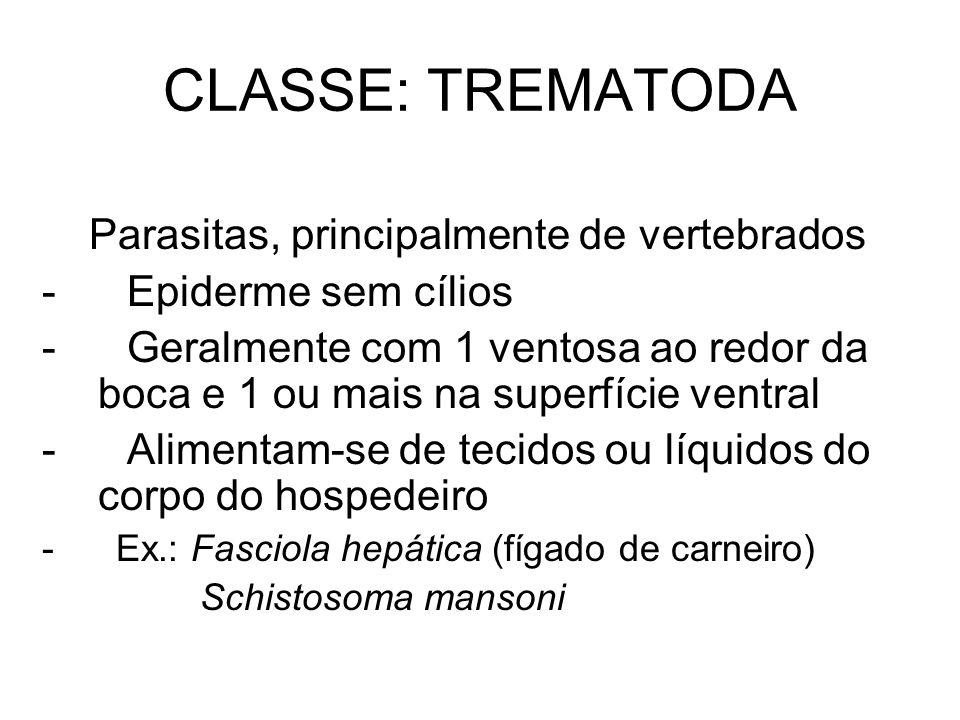 CLASSE: TREMATODA Parasitas, principalmente de vertebrados - Epiderme sem cílios - Geralmente com 1 ventosa ao redor da boca e 1 ou mais na superfície