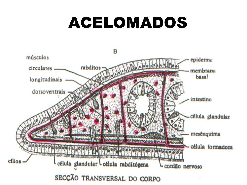 Ciclo de vida da Fasciola hepatica
