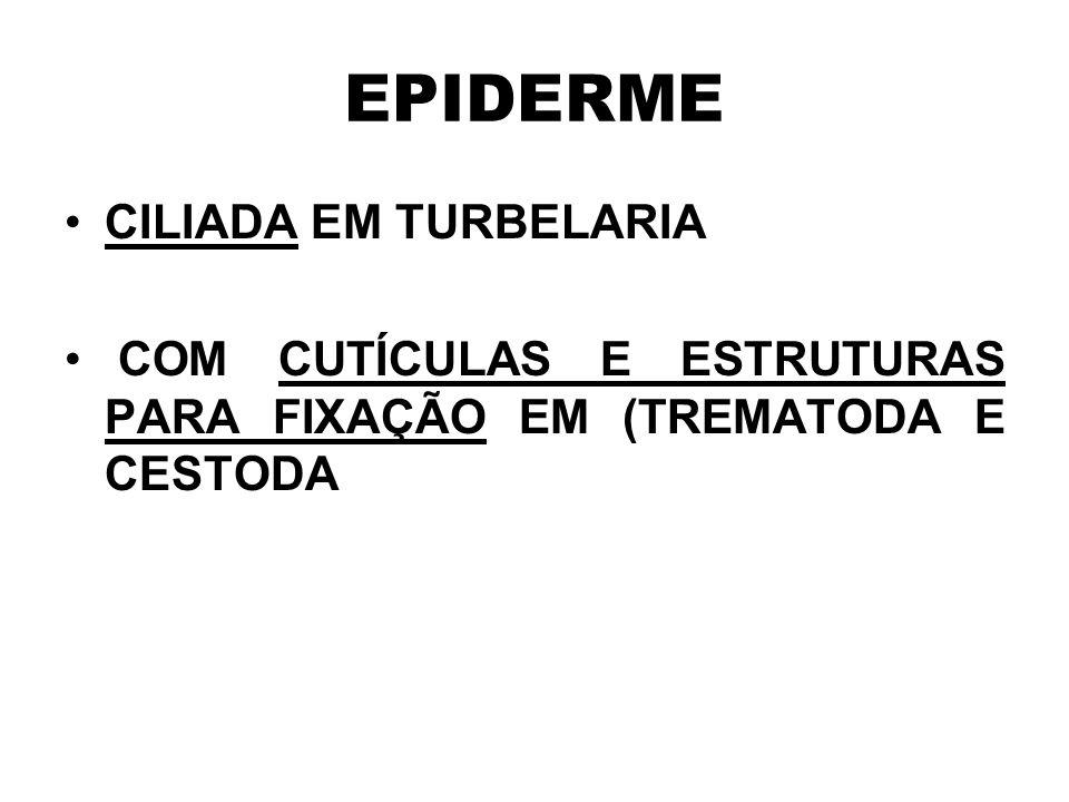 EPIDERME CILIADA EM TURBELARIA COM CUTÍCULAS E ESTRUTURAS PARA FIXAÇÃO EM (TREMATODA E CESTODA