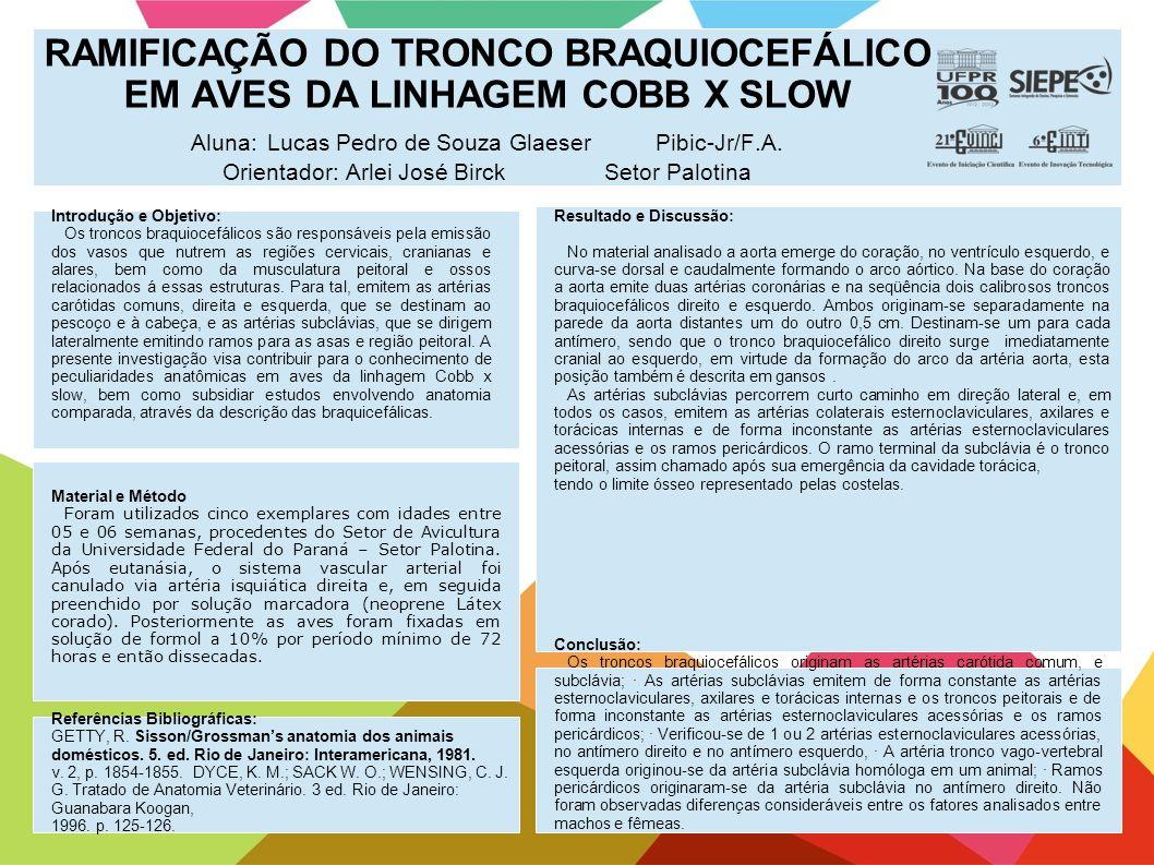 RAMIFICAÇÃO DO TRONCO BRAQUIOCEFÁLICO EM AVES DA LINHAGEM COBB X SLOW Aluna: Lucas Pedro de Souza Glaeser Pibic-Jr/F.A. Orientador: Arlei José Birck S