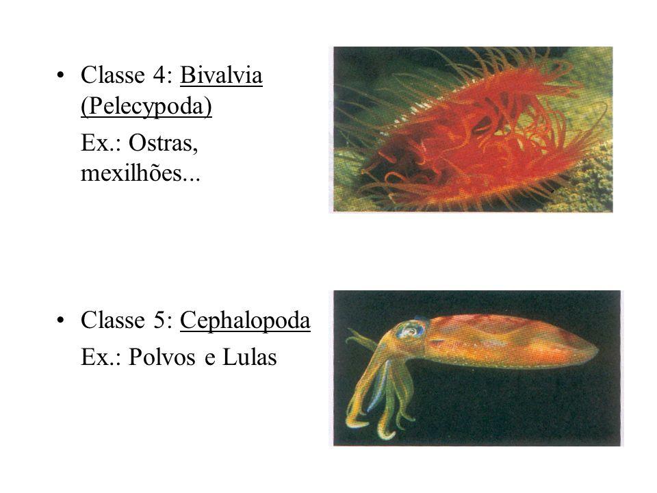 Classe 4: Bivalvia (Pelecypoda) Ex.: Ostras, mexilhões... Classe 5: Cephalopoda Ex.: Polvos e Lulas