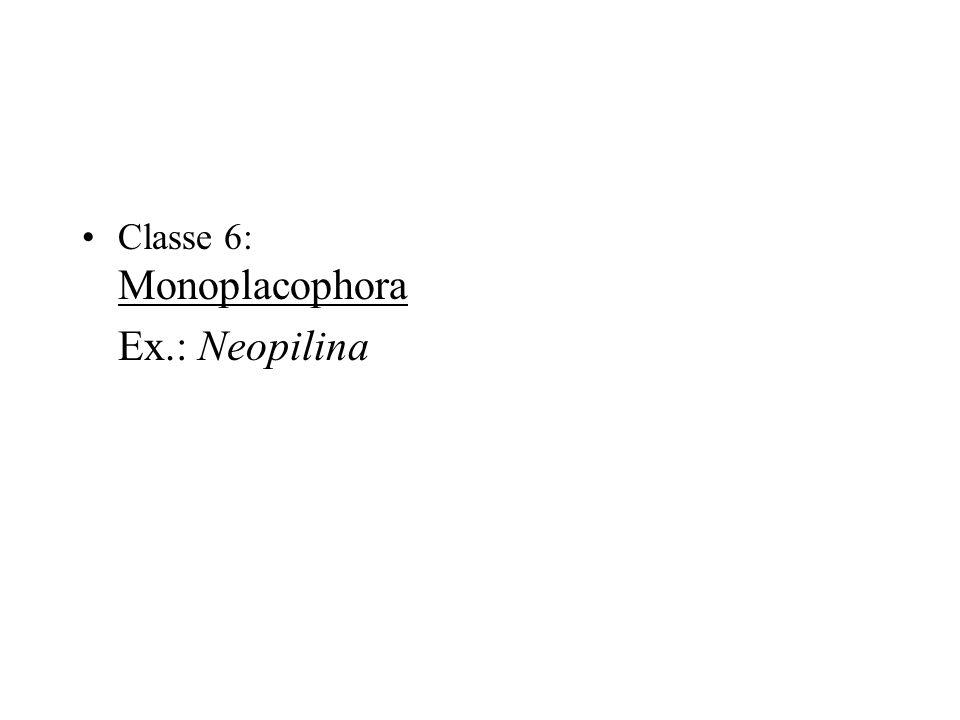 Classe 6: Monoplacophora Ex.: Neopilina