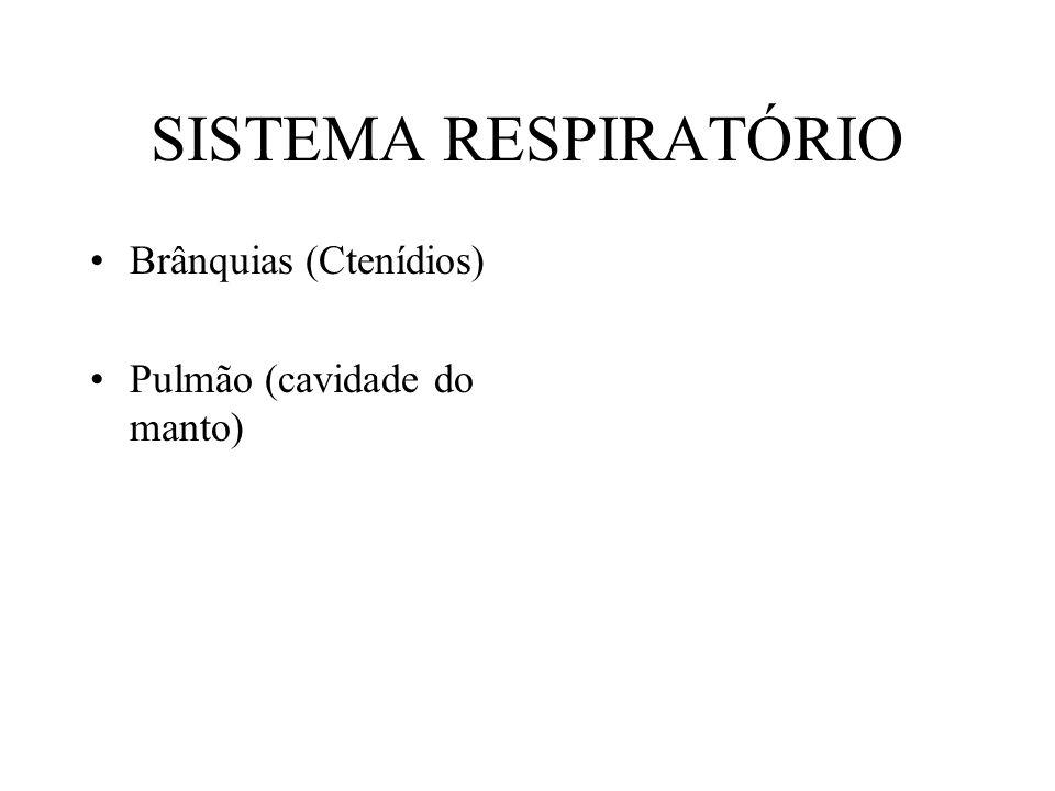 SISTEMA RESPIRATÓRIO Brânquias (Ctenídios) Pulmão (cavidade do manto)