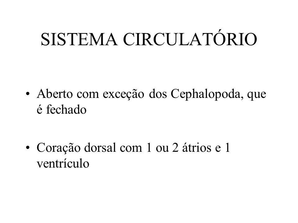 SISTEMA CIRCULATÓRIO Aberto com exceção dos Cephalopoda, que é fechado Coração dorsal com 1 ou 2 átrios e 1 ventrículo