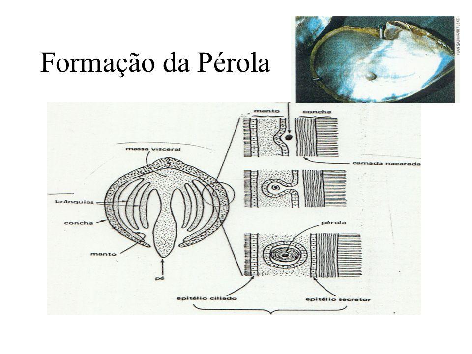 Formação da Pérola