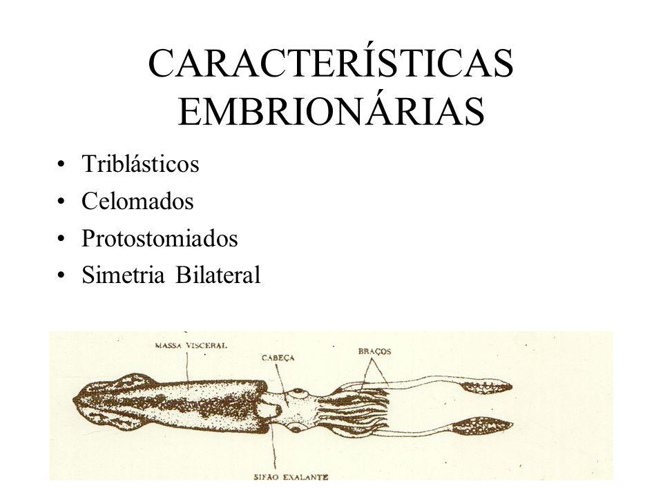CARACTERÍSTICAS EMBRIONÁRIAS Triblásticos Celomados Protostomiados Simetria Bilateral