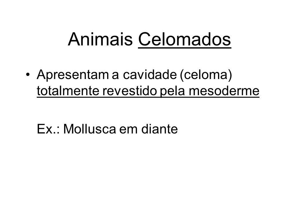 Animais Celomados Apresentam a cavidade (celoma) totalmente revestido pela mesoderme Ex.: Mollusca em diante