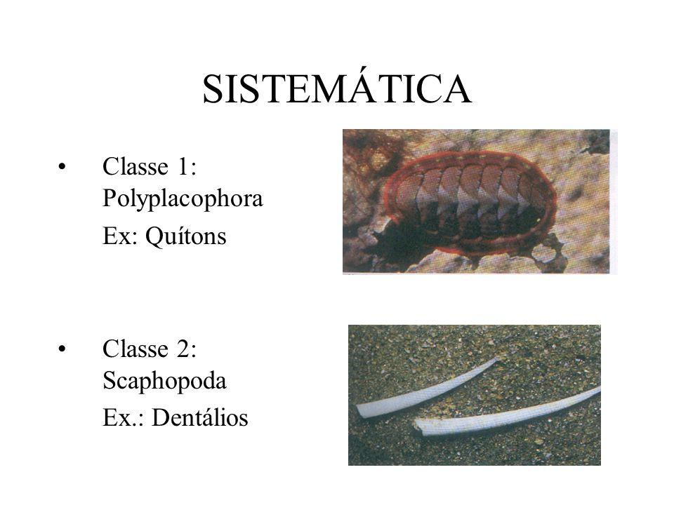 Classe 3: Gastropoda (Univalva) Ex.: Caracóis, caramujos, lesmas
