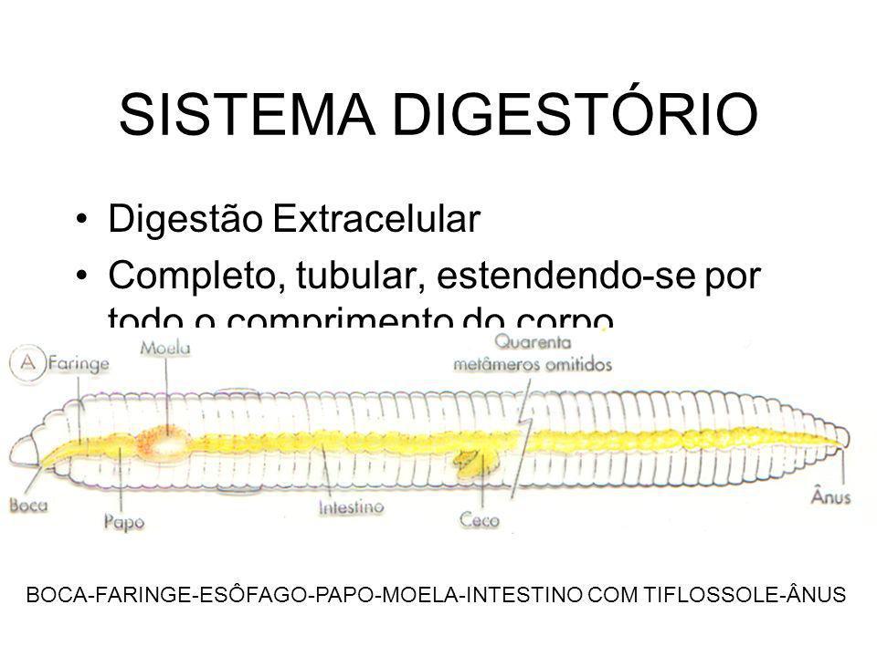 SISTEMA DIGESTÓRIO Digestão Extracelular Completo, tubular, estendendo-se por todo o comprimento do corpo BOCA-FARINGE-ESÔFAGO-PAPO-MOELA-INTESTINO CO
