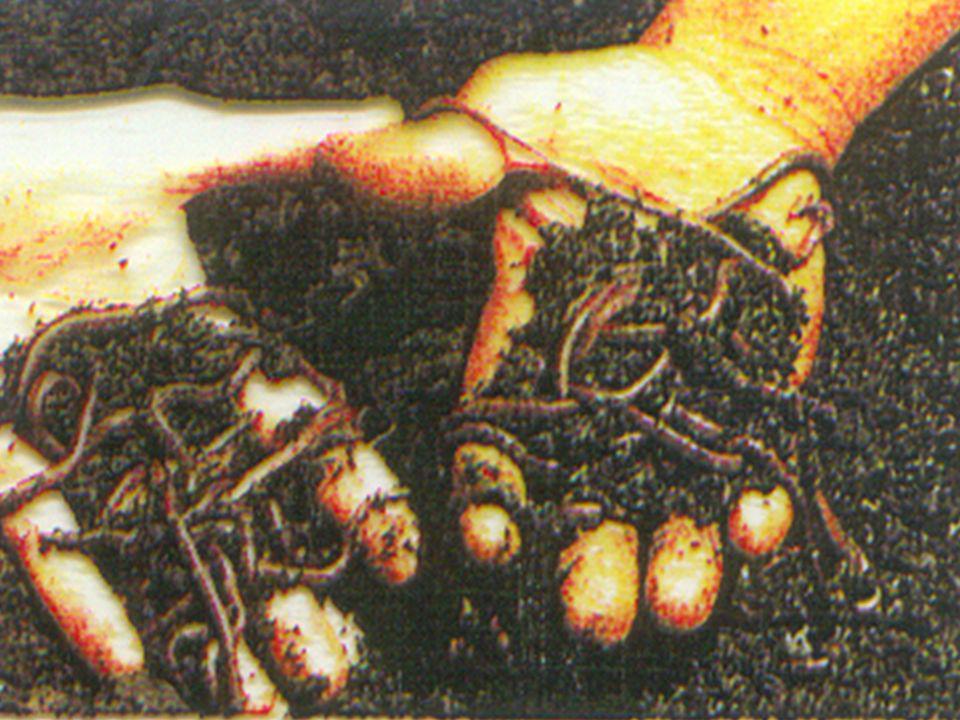 Ex.: Sanguessuga Habitam o solo úmido ou a água doce