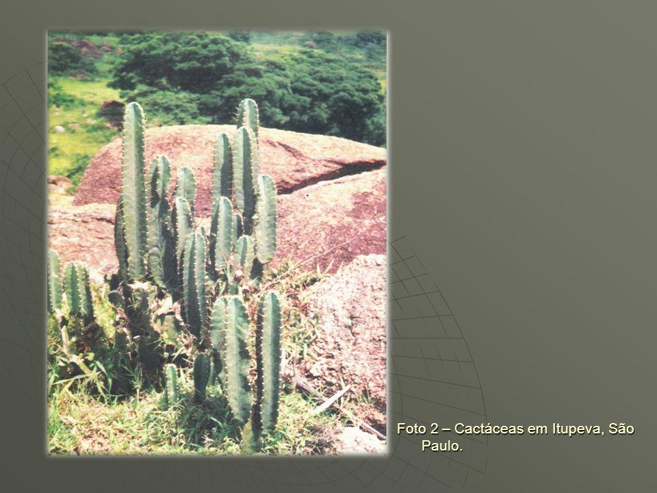 EVIDÊNCIAS Evidências litológicas encontradas na franja litorânea paulista centro-meridional, com linhas de pedras em barrancos do Ribeira do Iguape,