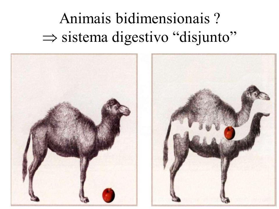 Animais bidimensionais ? sistema digestivo disjunto