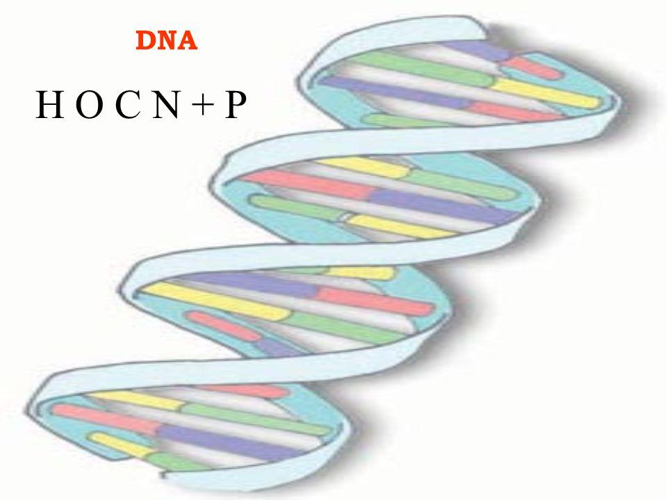 DNA H O C N + P