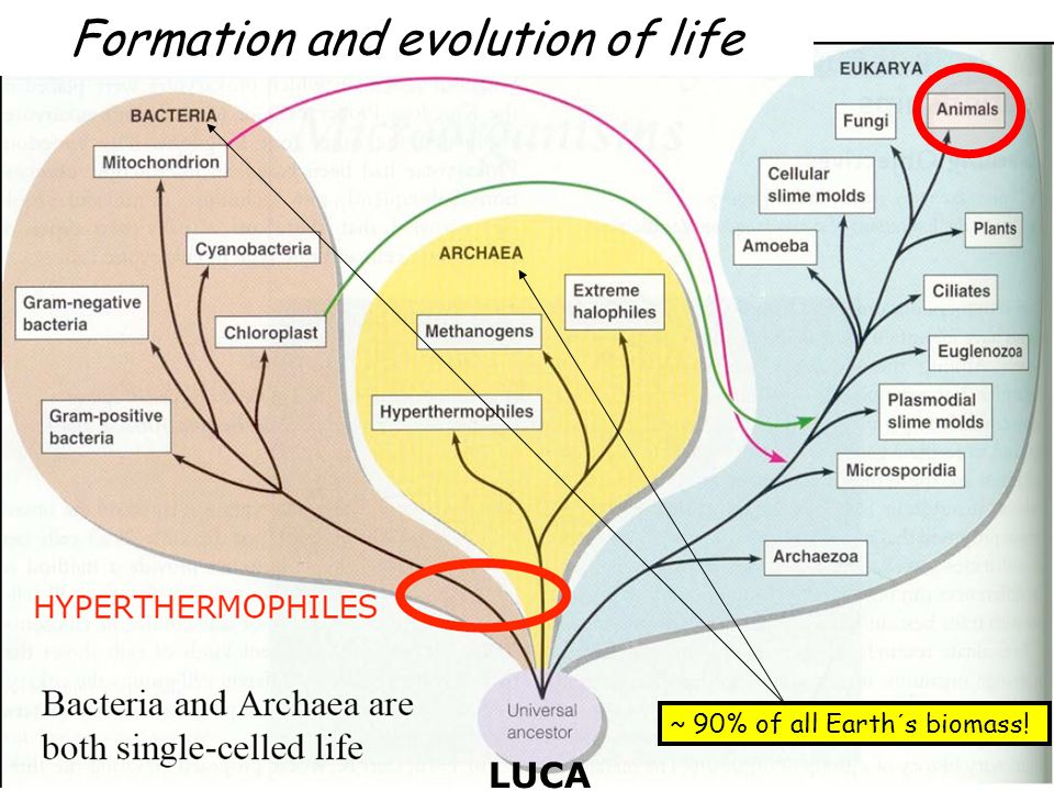 Formation and evolution of life ~ 90% of all Earth´s biomass! LUCA