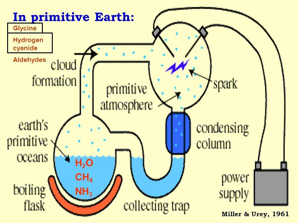 In primitive Earth: Miller & Urey, 1961 Glycine Hydrogen cyanide Aldehydes H 2 O CH 4 NH 3