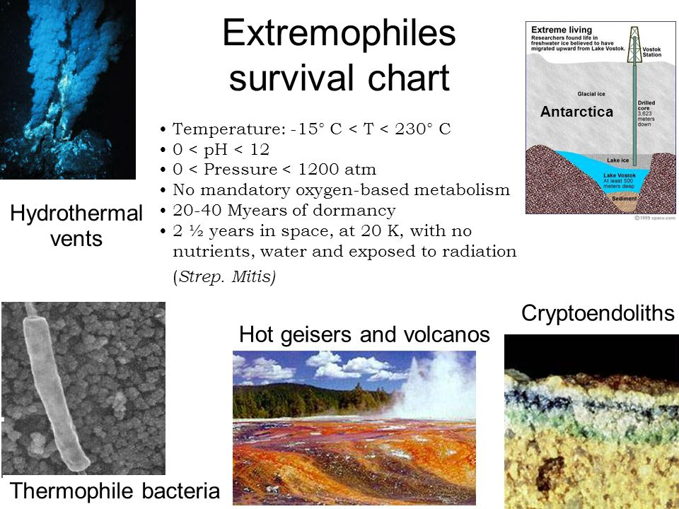 Cryptoendoliths Thermophile bacteria Hydrothermal vents Hot geisers and volcanos Extremophiles survival chart Antarctica Temperature: -15° C < T < 230° C 0 < pH < 12 0 < Pressure < 1200 atm No mandatory oxygen-based metabolism 20-40 Myears of dormancy 2 ½ years in space, at 20 K, with no nutrients, water and exposed to radiation ( Strep.
