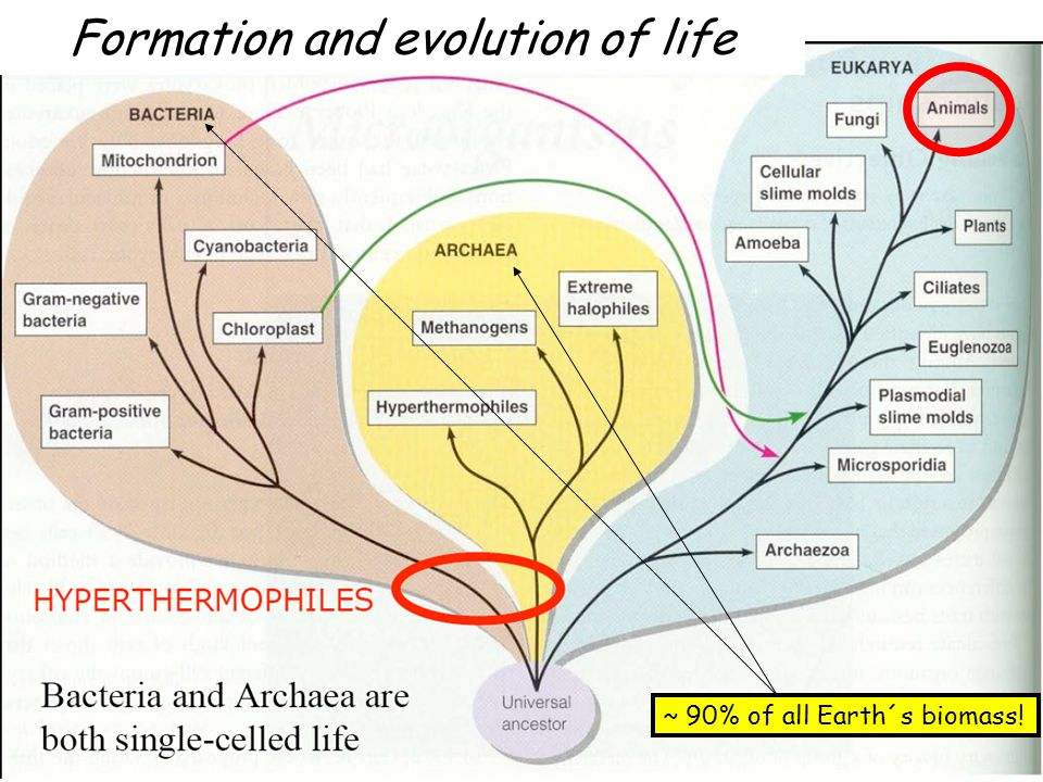 Formation and evolution of life ~ 90% of all Earth´s biomass!