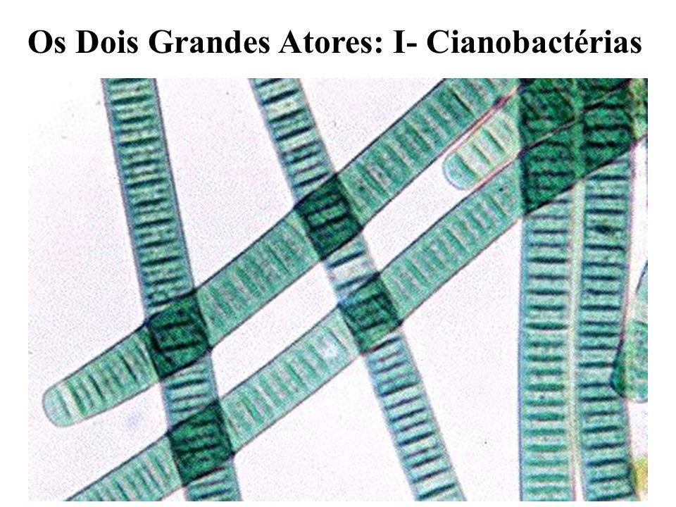 Os Dois Grandes Atores: I- Cianobactérias