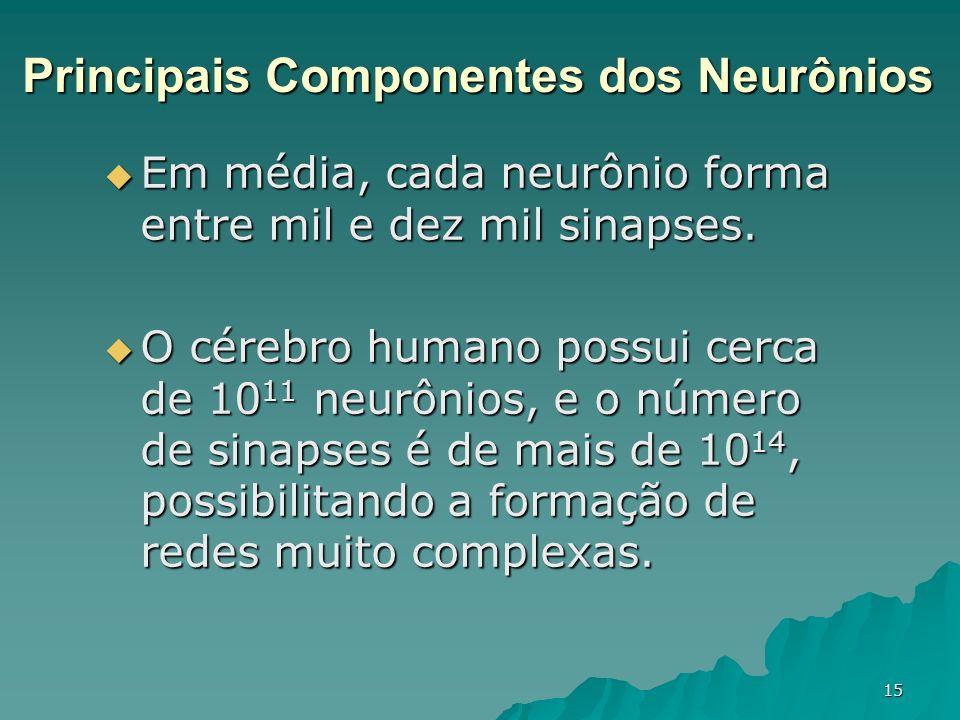 15 Em média, cada neurônio forma entre mil e dez mil sinapses. Em média, cada neurônio forma entre mil e dez mil sinapses. O cérebro humano possui cer
