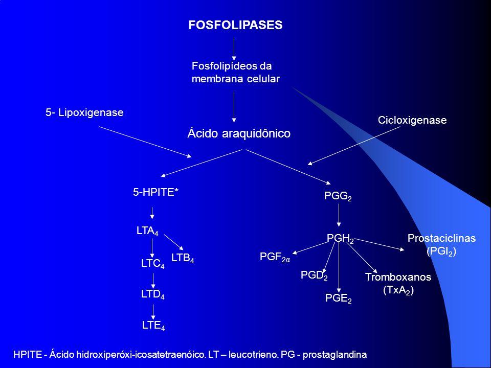FOSFOLIPASES Fosfolipídeos da membrana celular Ácido araquidônico 5- Lipoxigenase Cicloxigenase 5-HPITE* LTA 4 LTC 4 LTD 4 LTE 4 LTB 4 PGG 2 PGH 2 PGF