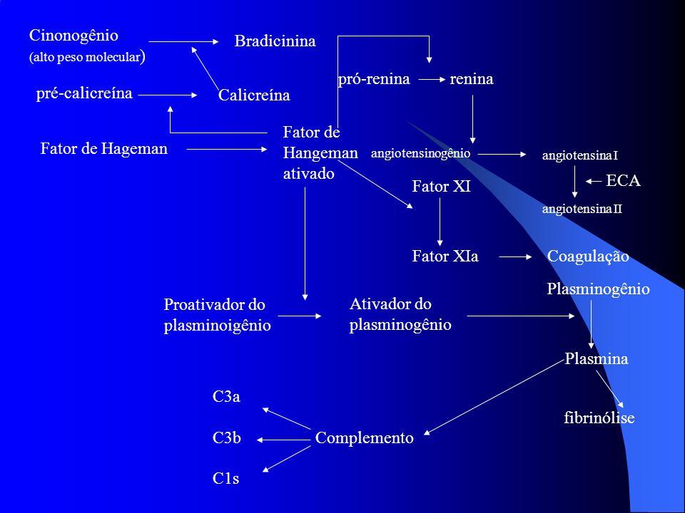 Cinonogênio (alto peso molecular ) Bradicinina Calicreína pré-calicreína Fator de Hageman Fator de Hangeman ativado pró-reninarenina angiotensinogênio